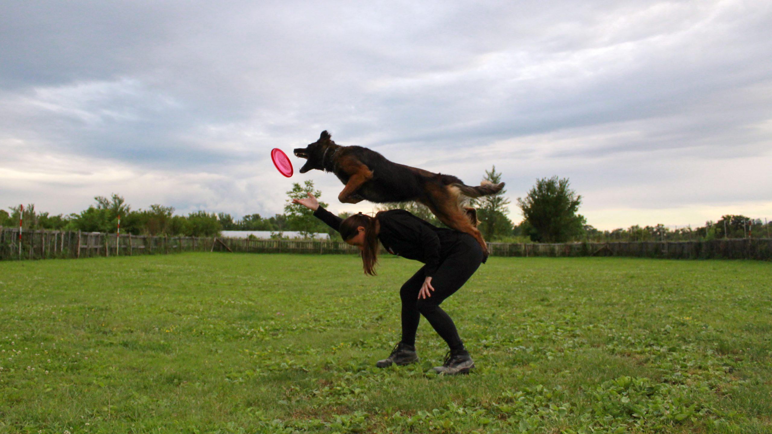 Alfa Canis frizbi tim