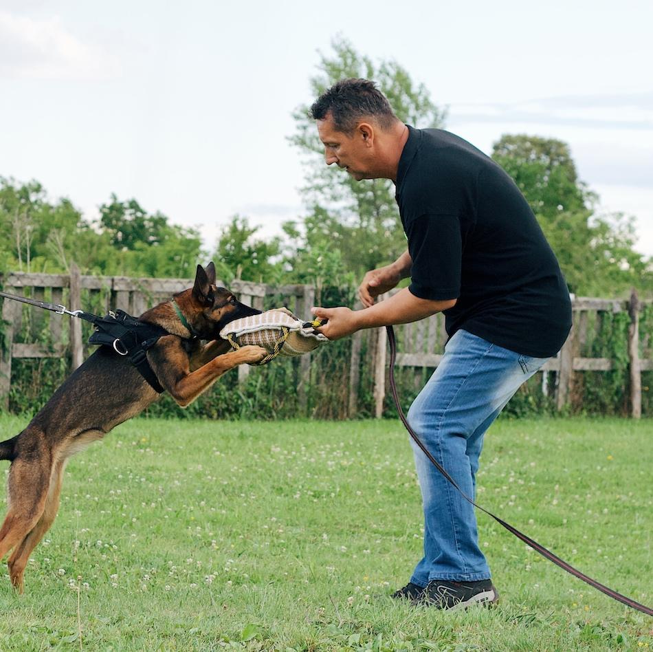 Plijenski nagon Alfa Canis treninzi