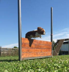 Alfa Canis
