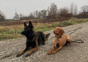 Treninzi poslušnosti i socijalizacije pasa