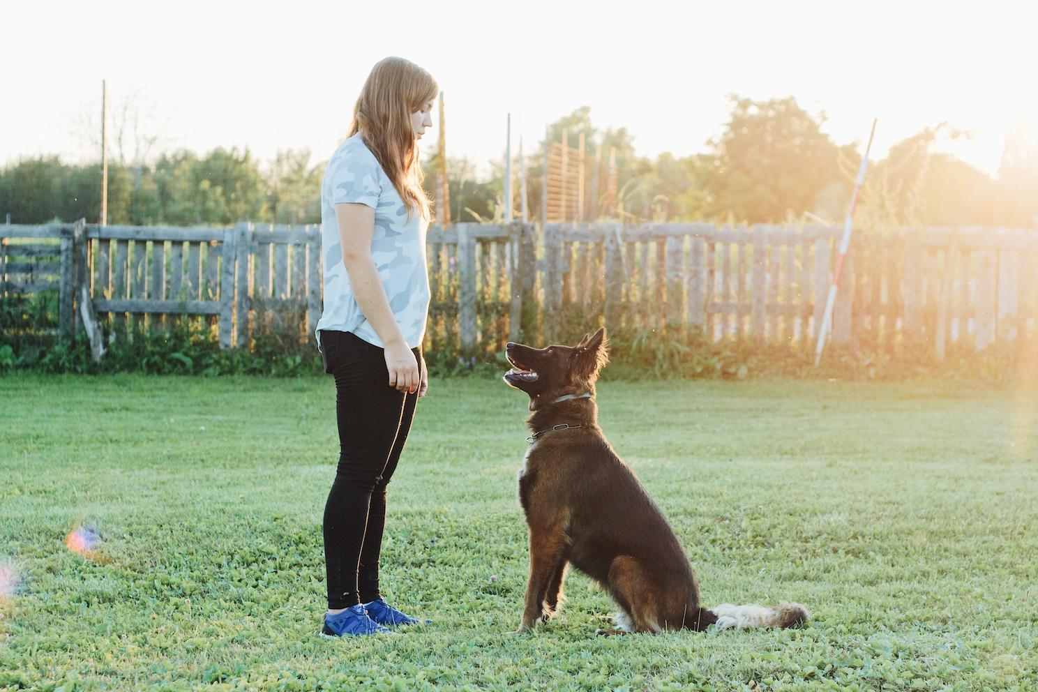 Poslušnost i socijalizacija pasa Alfa Canis